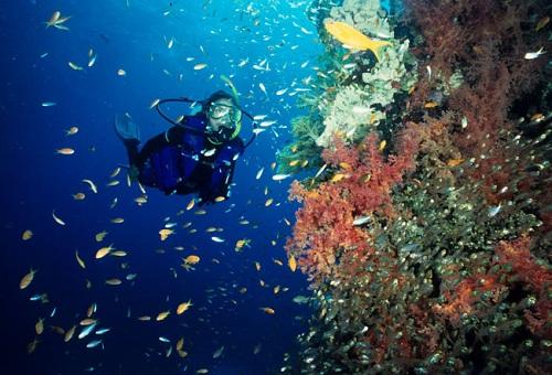 bunaken-underwater