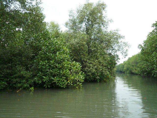 Hutan Mangrove Tugurejo Semarang Barat (sumber: Opojal.com)