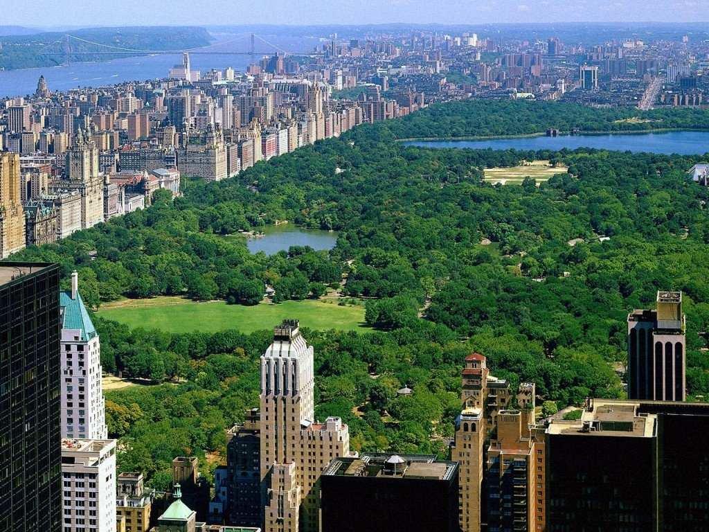 PEPOHONAN YANG MELANTUNKAN PUISI DI CENTRAL PARK NEW YORK